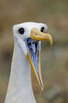 I wonder what this bird is saying.