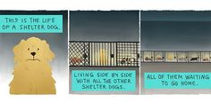 http://ift.tt/2mCK0nZ Just Pinned to Animals: Heartwarming Illustration Of A Shelter Dogs Life Will Make You Cry Ugly Happy Tears http://ift.tt/2n6Kwil http://ift.tt/2oE2N3g
