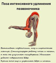 Trx Yoga, Yoga Fitness, Health Fitness, 30 Day Yoga, Yoga Anatomy, Basic Yoga, Ab Workout At Home, Yoga For Weight Loss, Yoga Tips