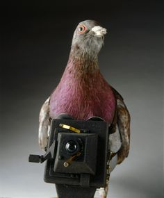 Pigeons with tiny cameras were commonly released over military sites during World War I. This aerial surveillance camera is from Germany, circa 1917-1918.