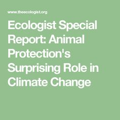 Ecologist Special Report: Animal Protection's Surprising Role in Climate Change