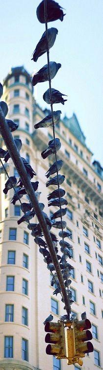 Birds NYC