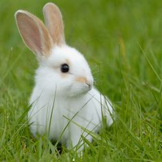 Caring for the Environment, Animals and Ourselves - Natural Product News - Mother Earth Living Cute Little Animals, Cute Funny Animals, Cute Baby Bunnies, Cute Babies, Animal Pictures, Cute Pictures, Lapin Art, Funny Animal Quotes, Wild Life
