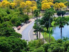 Parque Solon de Lucena - Lagoa no Centro de João Pessoa-PB. Paisagismo Burle Marx.
