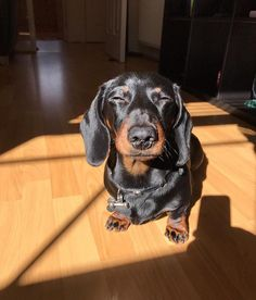 Dachshund Dog At The Beach Cute Funny Dogs, Cute Funny Animals, Cute Baby Animals, Animals And Pets, Mini Dachshund, Dachshund Puppies, Cute Puppies, Mini Weiner Dog, Lab Puppies