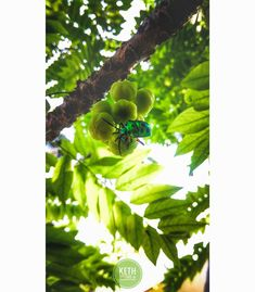 . . .  Kevin Jason ( @i_am__k_vin ) . #mobilephotography #macrophotography #beauty #indianbestclicks #i_hobbygraphy #naturephotography #naturelovers #limewitphotography #lovenature #flowers #flowerphotography #redminote4 #green #gogreen #greenphotography #chennaidiaries #chennaiphotography  #indianphotography #worldphotography #chennaite #blink #nature #lightroom #snapseed #snapseedediters
