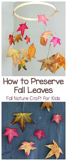 Preserve Leaves: Fun Fall Craft for Kids Two Ways to Preserve Fall Leaves: Fall Nature Craft and Science Activity for Kids! ~ Two Ways to Preserve Fall Leaves: Fall Nature Craft and Science Activity for Kids! Autumn Activities For Kids, Fall Crafts For Kids, Thanksgiving Crafts, Holiday Crafts, Fun Crafts, Art For Kids, Fall Leaves Crafts, Kids Nature Crafts, Leaf Crafts Kids