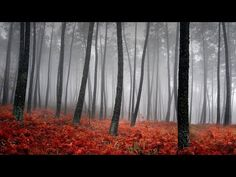 🎶Best Classical Music For Meditation, Musical Meditation 24/7💖 - YouTube Best Classical Music, Deep Sleep Music, Fall Images, Fall River, Yellow Leaves, Paris Photos, Garden Photos, Meditation Music, Landscape Photos