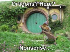 30 Bearded Dragon Memes to Make You Smile | AnimalPages