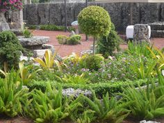 Coral Castle trees