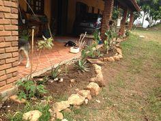 Pedras do quintal mesmo, fazendo vez de separador de grama e formatando o canteiro.