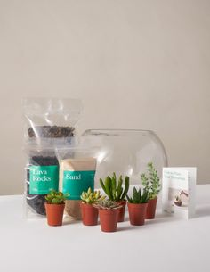 Succulent refers to a wide range of drought-tolerant plants. Our Succulent Terrarium Kit features everything you need to DIY your very own miniature desertscape — including six assorted succulents, bags of cacti mix, lava rocks and sand, a 10 Succulent Planter Diy, Succulent Landscaping, Diy Planters, Indoor Planters, Landscaping Ideas, Plants Indoor, Succulent Plants, Garden Planters, Indoor Garden