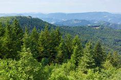 Schwarzwald Switzerland, Mountains, Nature, Travel, Black Forest, Naturaleza, Viajes, Destinations, Traveling