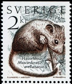 Stamps of Small Animals / Mammals / Fauna - Stamp Community Forum - Page 7