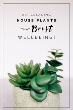 Air Cleaning House Plants that Boost Wellbeing!