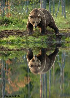 Event: you are bathing early one morning and look up to encounter a bear on the opposite side of the stream....