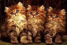 chats magnifiques - Google zoeken