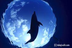 PhotoGallery[ INTO THE BLUE ] 水中写真家 越智隆治