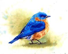 Original Watercolor, Bluebird, Feather, Birds, Home Decoration, Blue, Orange, Garden, Decorative