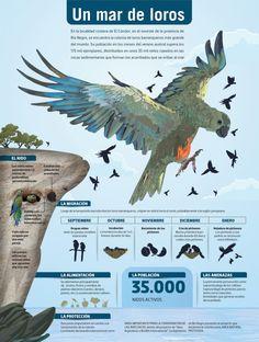 Un mar de loros #infografia #infografia