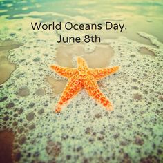 Let's #Unite for #WorldOceansDay! Let's #Celebrate! #WildlifeEarth will be posting!