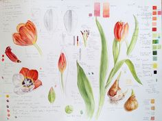 Art course teaching botanical illustration online with Dianne Sutherland
