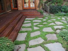 baby tears and stepping stones | outdoor dreams | Pinterest