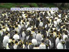 Funny Penguin Song for Kids | Music video - YouTube