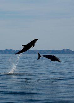 Dolphins! Near La Paz, Baja California Sur, Mexico. Picture from www.facebook.com/bajacom