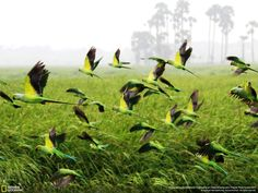 pretty birds The 35 Most Spectacular Wildlife Photos From The National Geographic Photo Contest Pretty Birds, Beautiful Birds, Animals Beautiful, Photos Du, Cool Photos, 4k Wallpaper Android, Animal Photography, Nature Photography, National Geographic Photo Contest