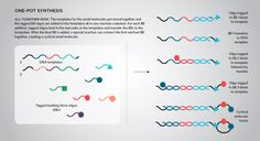 Just like programmed split-and-pool, this approach—called DNA-templated synthesis—uses DNA templates to guide synthesis of the molecules in the library. However, it affords you the ease of making the entire library in a single reaction vessel.