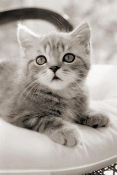 If Shain saw this kitty it would already be in my living room!!!!