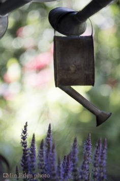 Blommig Fredag: Bird Feeders, Garden, Outdoor Decor, Home Decor, Garten, Decoration Home, Room Decor, Gardens, Tuin