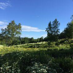 #latergram #landscape #fetsund #nature #nofilter #flower