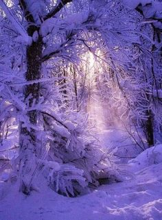 Winter snow ~ Dreamy Nature