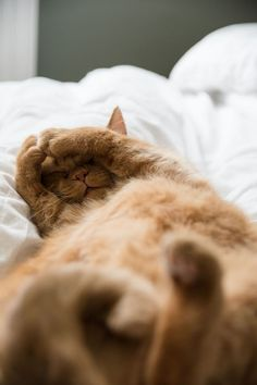 Living with cats - these are the favorite places of our cats - craftifair - Cats - sleeping orange cat - I Love Cats, Crazy Cats, Cool Cats, Pretty Cats, Beautiful Cats, Cat Ideas, Gatos Cool, Image Chat, Cat Aesthetic