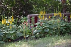 Gardens - So I Was Thinking High School Sweethearts, Marry Me, Paths, How To Find Out, Photo Galleries, Gardens, Outdoor Structures, Gallery, World