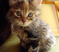 Lovely-KittyCats, kitt3nl0ve: ...