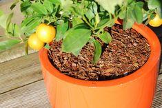 Les plantes en pot elles aussi ont besoin d'être arrosées, et souvent plus que les plantes cultivées en pleine terre. En effet, la terre dans les pots s'assèche plus rapidement, surtout s'ils sont exposés au plein soleil ou au vent. Les plantes en pot n'ont pas accès à des réserves d'eau du sol. Il faut donc trouver des solutions pour que les plantes en pot n'aient jamais soif : paillage, bouteille d'eau renversée, bac à réserve d'eau, mais aussi oya, feutrine et autre...