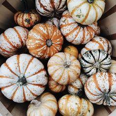 Pretty Squash Хэллоуин Тыквы, Огородничество, Осень, Осенние Тыквы, Штуки Для Хэллоуина, Цветочный Дизайн, Овощи, Небольшие Коттеджи