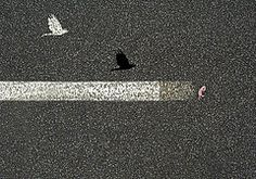 Featured Art - Gosh Hawk Road Kill by Sarah King Sarah King, King Art, Framed Prints, Canvas Prints, Art For Sale, Original Paintings, Tapestry, Artwork, Hanging Tapestry