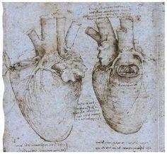 Léonard de Vinci - Étude de l'anatomie du cœur.
