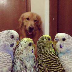 um-cachorro-oito-passarinhos-e-um-hamster-são-os-amigos-mais-incomuns-9