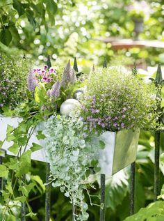 pflanzen arrangement mit blumen efeu geranien farne und immergr n balkon pinterest. Black Bedroom Furniture Sets. Home Design Ideas