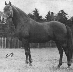 Sir Ethan Allen (6537) S 1909 Lippitt Foundation Stock