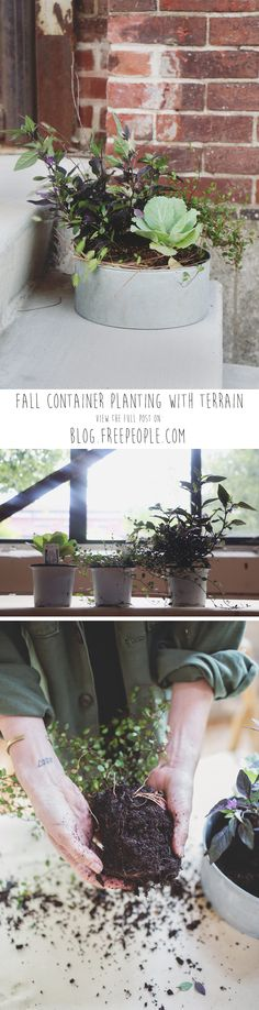 Fall Container Planting DIY With Terrain - Free People Blog
