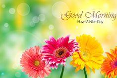 God Morning - Bright Flowers-wg16130