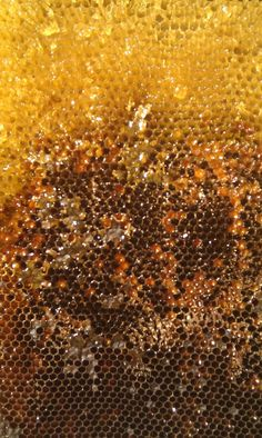 Honeycomb by Unknown - This photograph displays the range of golden tones that can be found in honeycomb and can be used as a basis for any colour swatches or palettes I may create. Milk And Honey, Pure Honey, Liquid Gold, Bee Happy, Save The Bees, Bees Knees, Queen Bees, Mellow Yellow, Bee Keeping