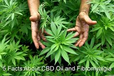 CBD oils are gaining popularity among chronic pain sufferers. Here are 5 facts about CBD oil and fibromyalgia that those considering them should know.