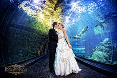 """Say """"I do"""" with aquatic creatures giving you their blessings in the background at aquariums. Many major aquariums, such as New Jersey's Aquarium Adventure, the Seattle Aquarium, and California's Birch Aquarium are open to hosting private events."""